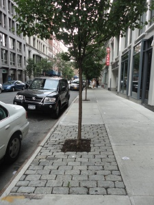 tree sandwiched between sidewalk and cars