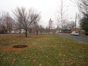 Open space for games will be shaded by the new trees canopy.