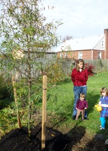 The trees are planted for you - and the children do the watering.