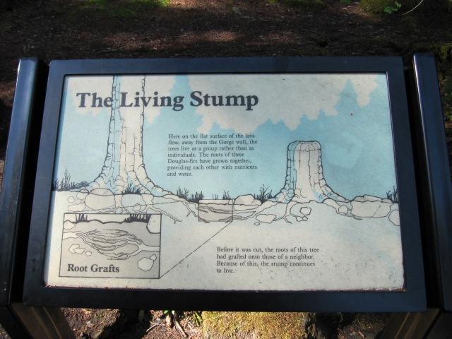 Living Stump sign