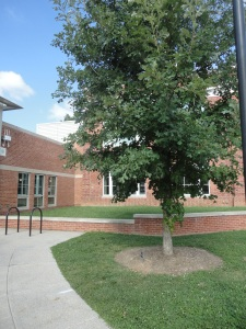 Westover - Reed School has all four plaza trees identified.